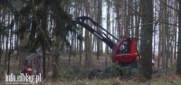Rozpoczęła się wycinka drzew w miejscu Przekopu Mierzei Wiślanej. Zobacz zdjęcia