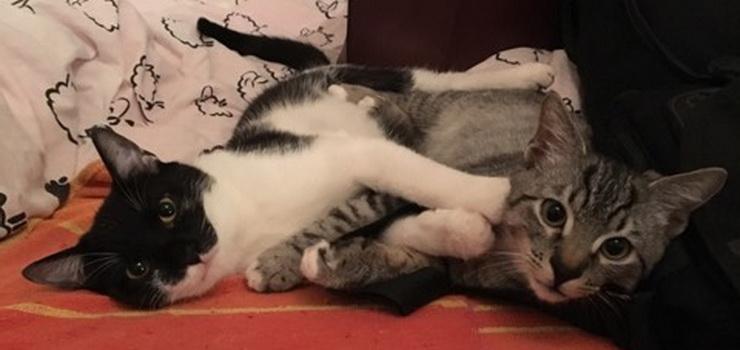 Dwa cudowne koty poszukują nowego domu!