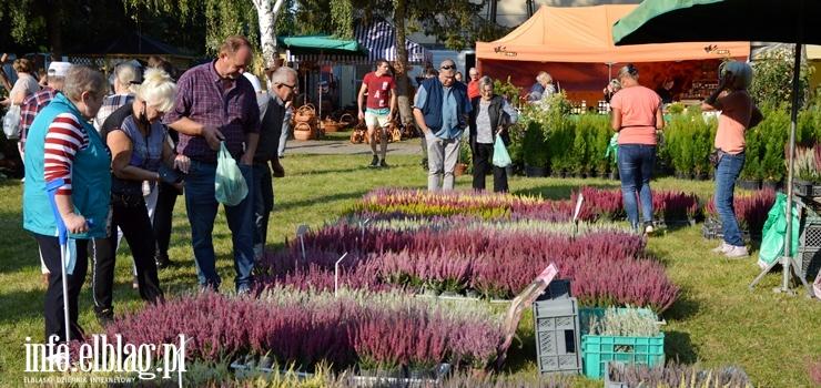 XXVI Jesienne Targi  Ogrodnicze w Starym Polu - zobacz zdjęcia